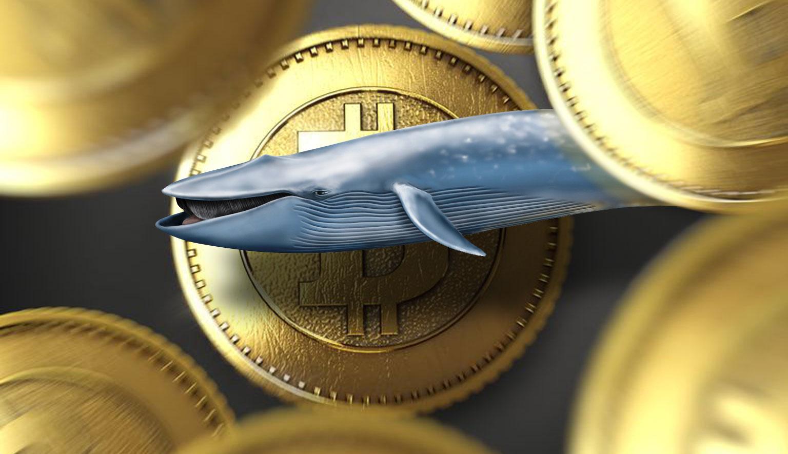 Биткоин-кит продал монеты по $58 000 купил 3521 BTC во время падения курса